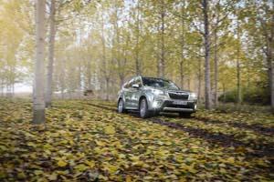 Foto Exteriores (49) Subaru Forester Suv Todocamino 2020
