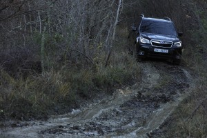 Subaru Forester, prueba off-road